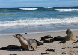 Seal beach Kangaroo Island