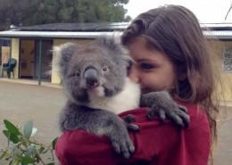 koala-viaggio